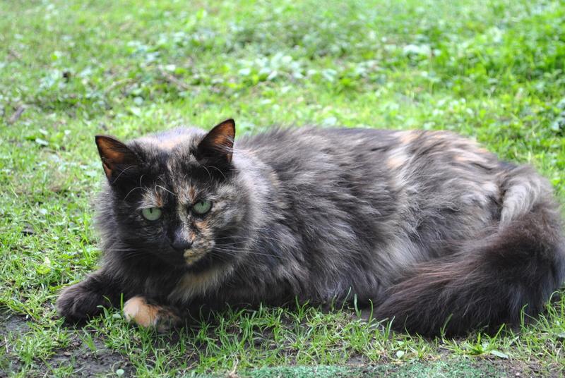Kitty Cat, née le 1er août 2010 STATUT :CHAT LIBRE - Page 4 Dsc_0077
