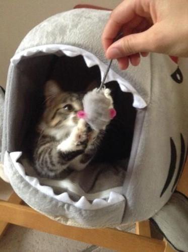 JAMES, rebaptisé TWIX, chaton né en juin 2017 Jame10