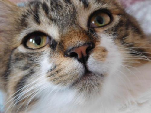 JAMES, rebaptisé TWIX, chaton né en juin 2017 Twi10