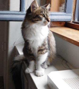 JAMES, rebaptisé TWIX, chaton né en juin 2017 Twix10