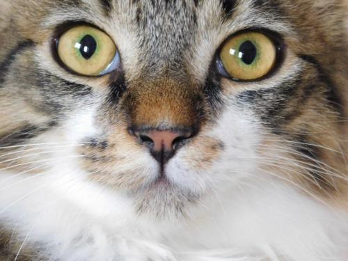 JAMES, rebaptisé TWIX, chaton né en juin 2017 Twix110