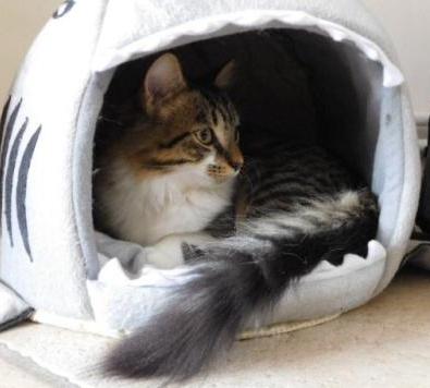 JAMES, rebaptisé TWIX, chaton né en juin 2017 Twix210