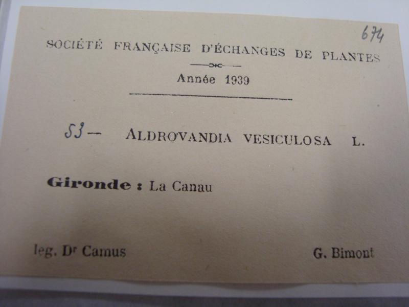 Herbier d'Aldrovanda vesiculosa 11janv12