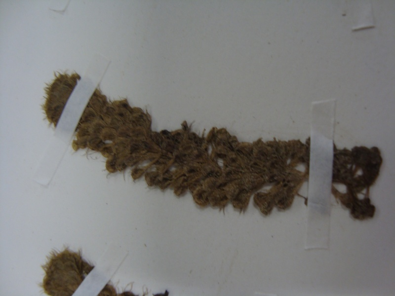 Herbier d'Aldrovanda vesiculosa 11janv20