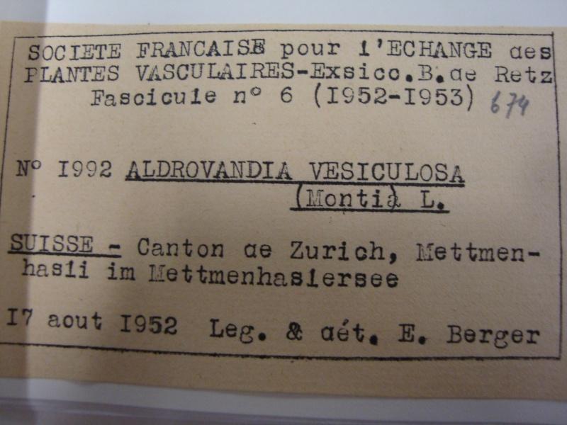 Herbier d'Aldrovanda vesiculosa 11janv21