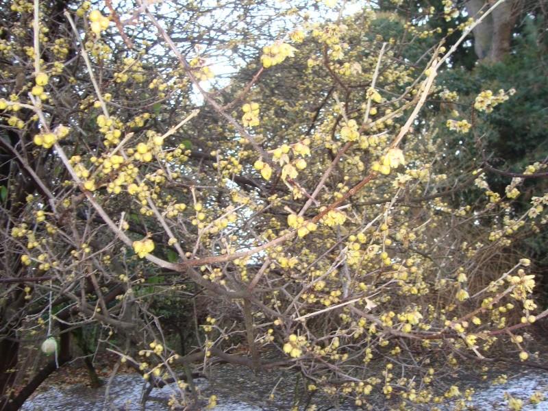 Floraisons hivernale Herbie21