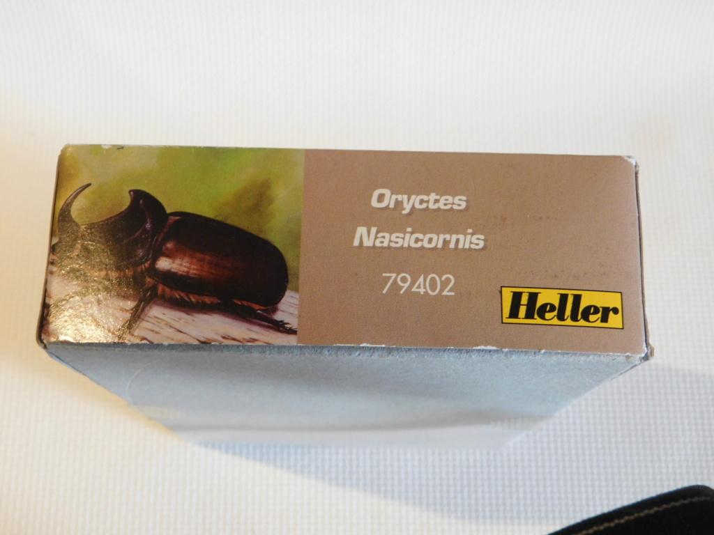 ORYCTES NASICORNIS  4/1ème Réf 79402 Dscn9913