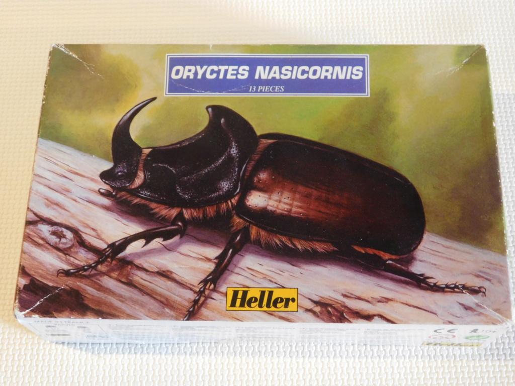 ORYCTES NASICORNIS  4/1ème Réf 79402 Dscn9914