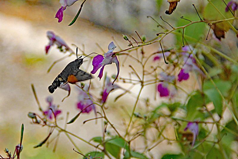 Merveilleuse nature Img_9315