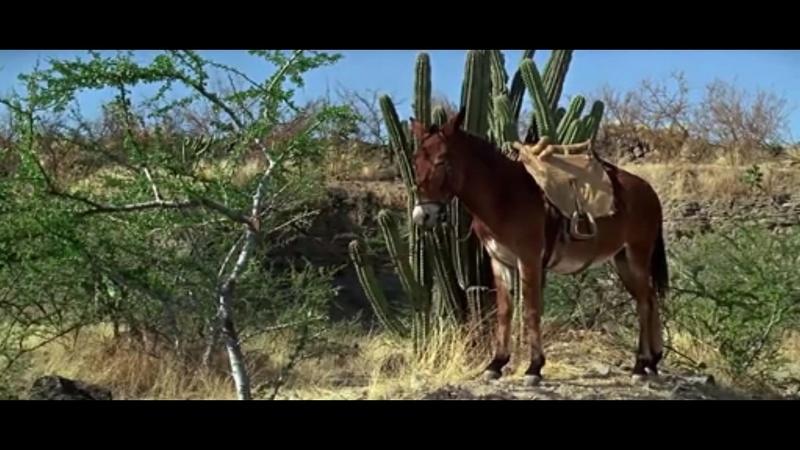 mules au ciné et à la Tv. Sans_t10