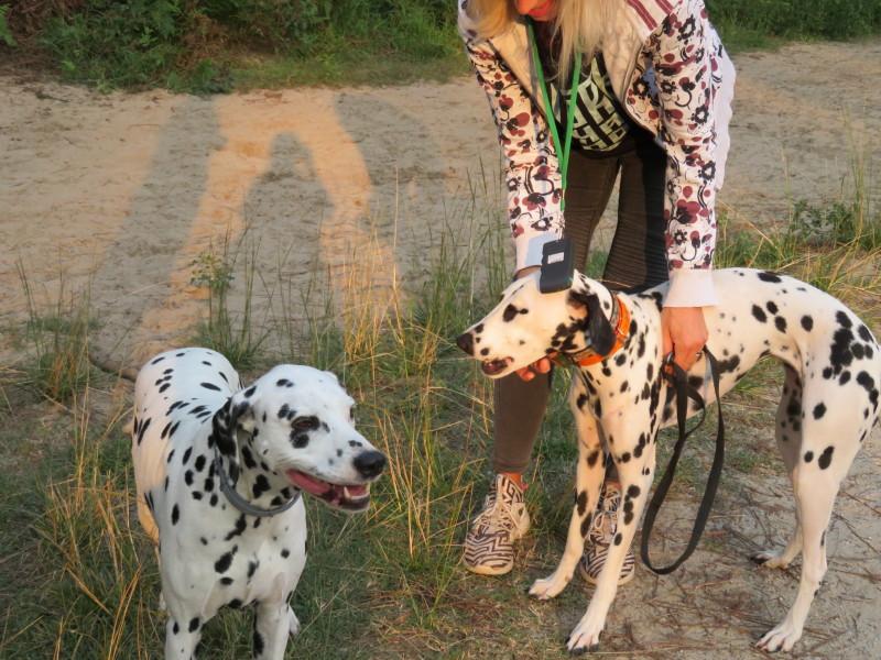 Dobby, petite dalmatienne Img_3810