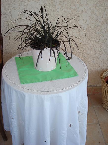 Ophiopogon planiscapus 'Nigrescens', Ophiopogon noir. 23-09-10