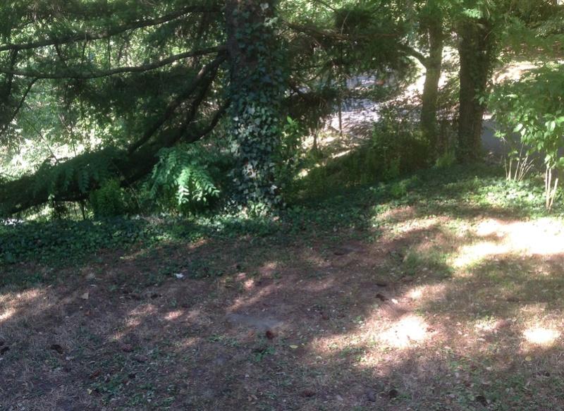 Sous mes arbres ..... Image11