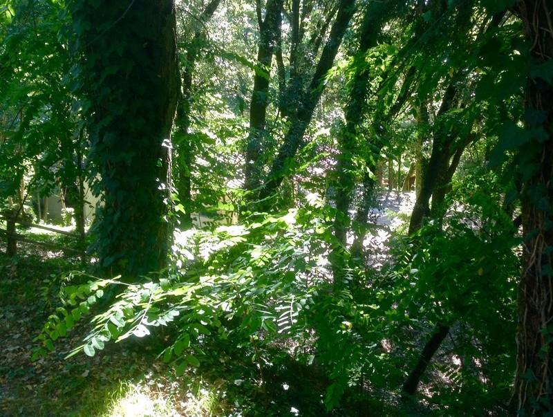 Sous mes arbres ..... Image12
