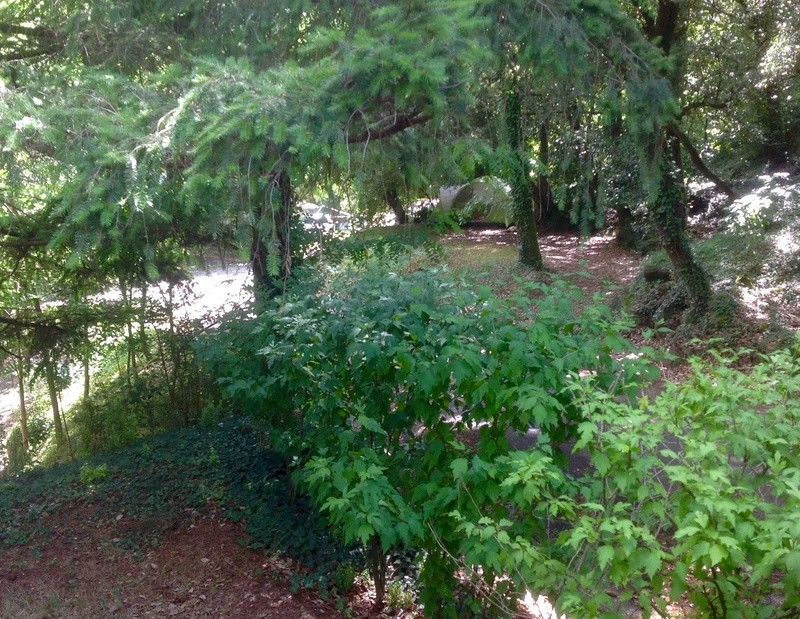 Sous mes arbres ..... Image13