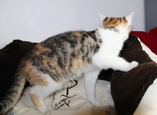 Glückskatze - KatzenBABY - KatzenKIND - SUCHT ein ZUHAUSE / geboren ca. 10. Mai 2017  16_08_19
