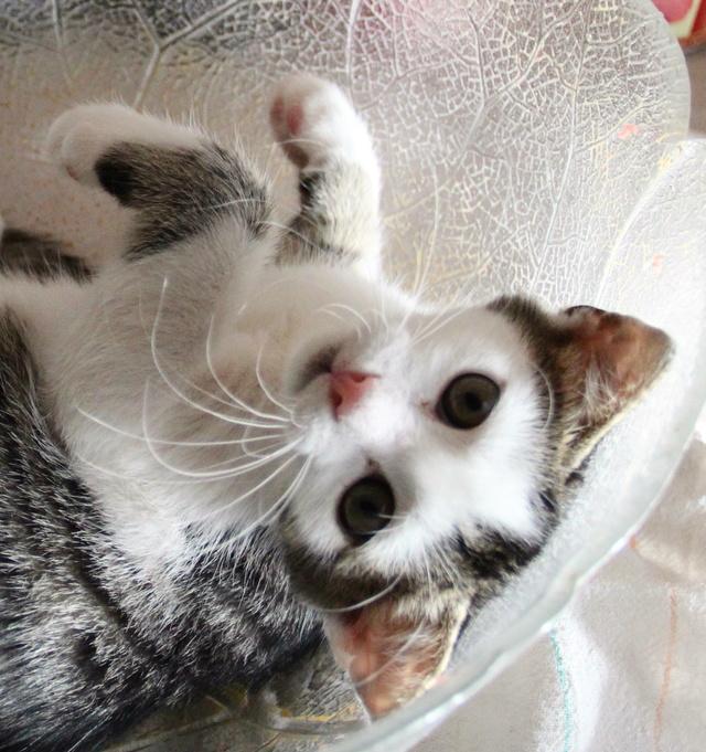 FELIX - Katzenbaby - SUCHT ein ZUHAUSE - geboren ca. 07.07.2017 - 16_09_10