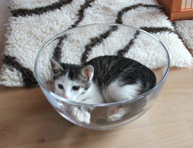 FELIX - Katzenbaby - SUCHT ein ZUHAUSE - geboren ca. 07.07.2017 - 16_09_11