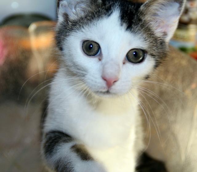 FELIX - Katzenbaby - SUCHT ein ZUHAUSE - geboren ca. 07.07.2017 - 16_09_13