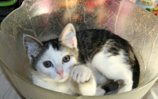 FELIX - Katzenbaby - SUCHT ein ZUHAUSE - geboren ca. 07.07.2017 - 16_09_15
