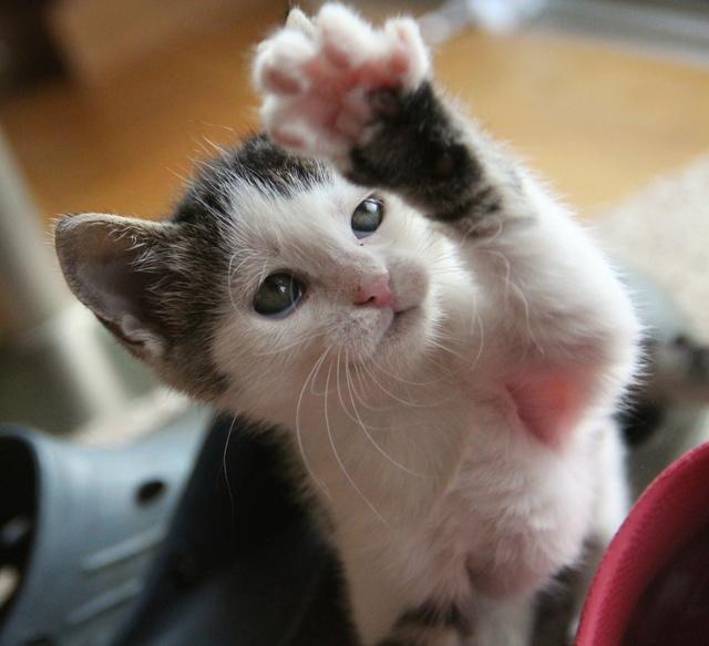 FELIX - Katzenbaby - SUCHT ein ZUHAUSE - geboren ca. 07.07.2017 - 24_08_11