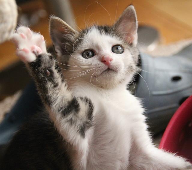 FELIX - Katzenbaby - SUCHT ein ZUHAUSE - geboren ca. 07.07.2017 - 24_08_13