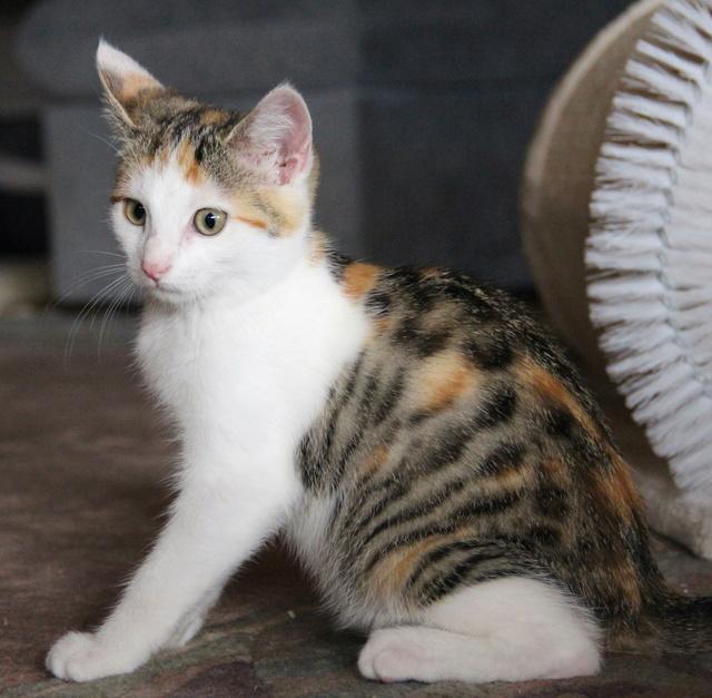 Glückskatze - KatzenBABY - KatzenKIND - SUCHT ein ZUHAUSE / geboren ca. 10. Mai 2017  24_08_17