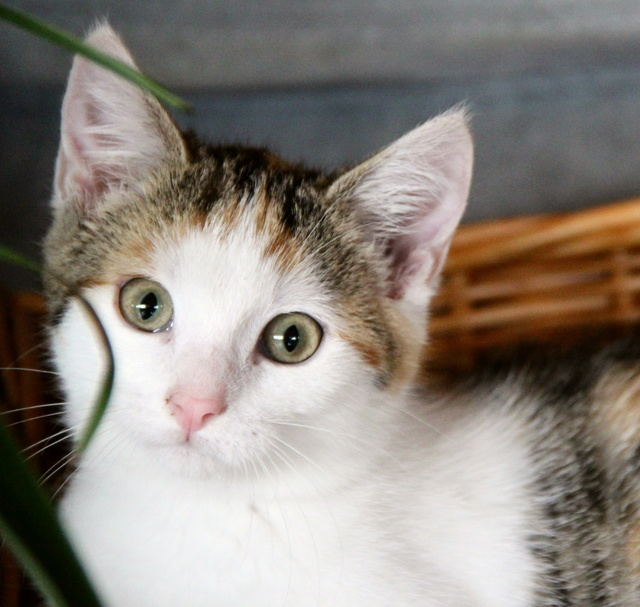 Glückskatze - KatzenBABY - KatzenKIND - SUCHT ein ZUHAUSE / geboren ca. 10. Mai 2017  24_08_18