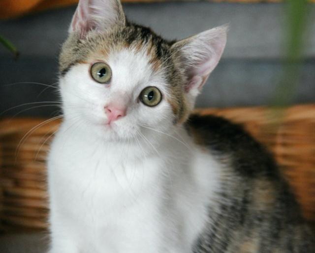 Glückskatze - KatzenBABY - KatzenKIND - SUCHT ein ZUHAUSE / geboren ca. 10. Mai 2017  24_08_20