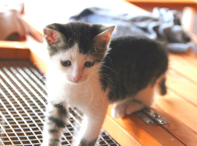 FELIX - Katzenbaby - SUCHT ein ZUHAUSE - geboren ca. 07.07.2017 - 24_08_23