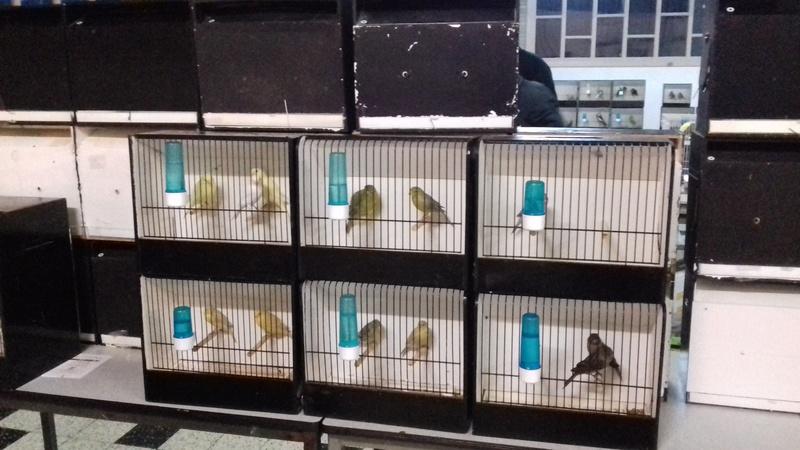 Renseignement sur expo Ornitho-Cub de Seraing ? 20170939