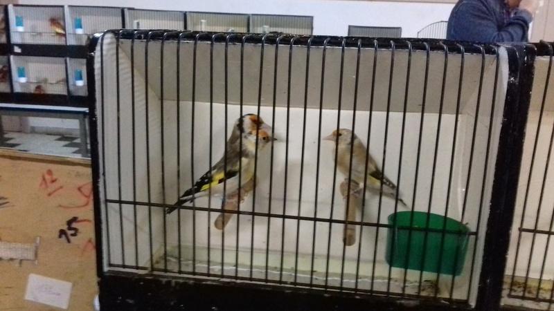 Renseignement sur expo Ornitho-Cub de Seraing ? 20170940