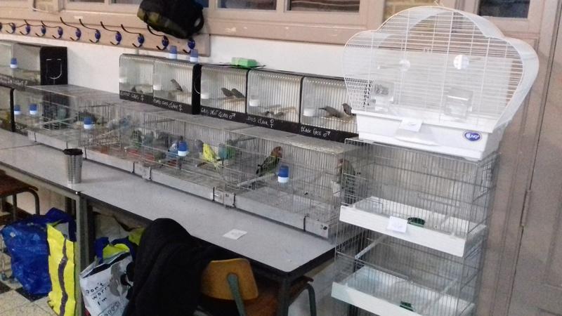 Renseignement sur expo Ornitho-Cub de Seraing ? 20170942
