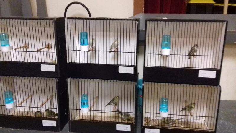bourses d'oiseaux a flemalle - Page 2 20171034