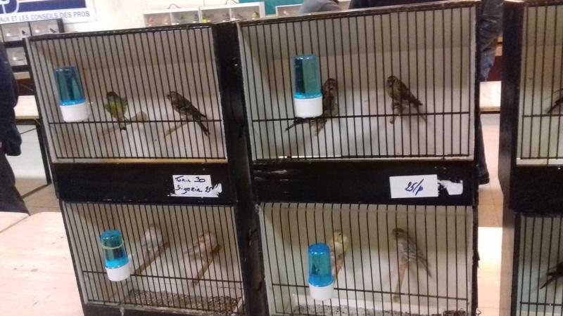 bourses d'oiseaux a flemalle - Page 2 20171042