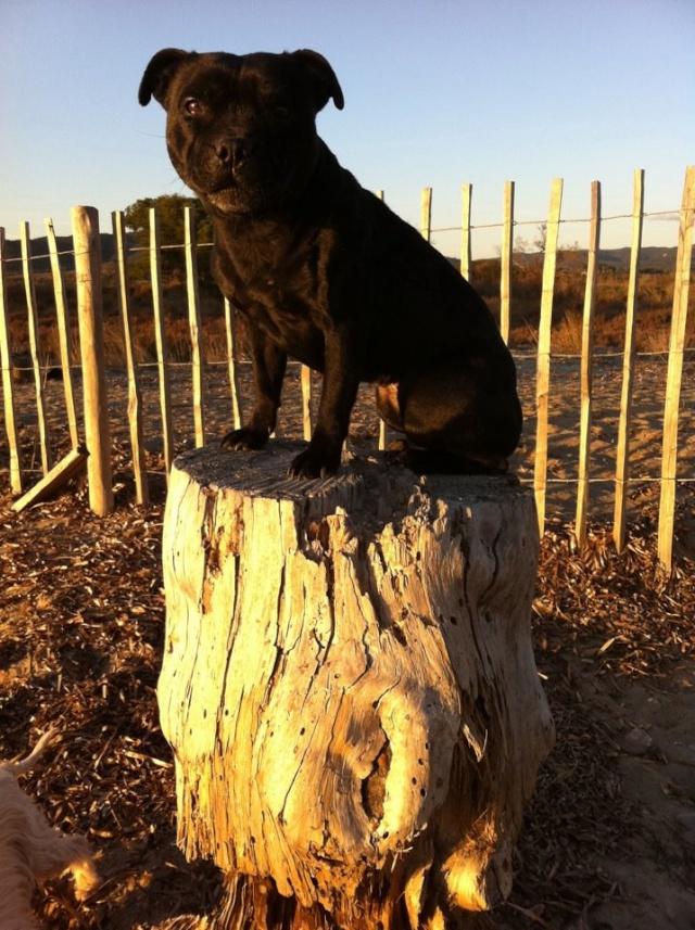 à Adopter chienne Cali - 6 ans Cali4010