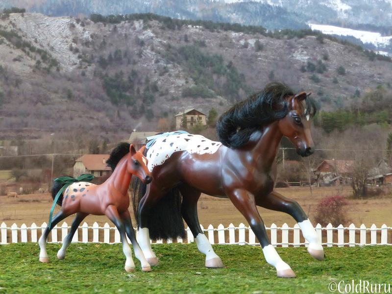Appaloosa en Vrac! (Grand Champion, mostly) P1530611