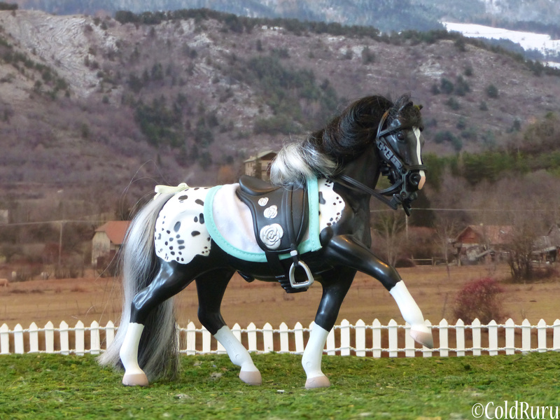 Appaloosa en Vrac! (Grand Champion, mostly) P1530612