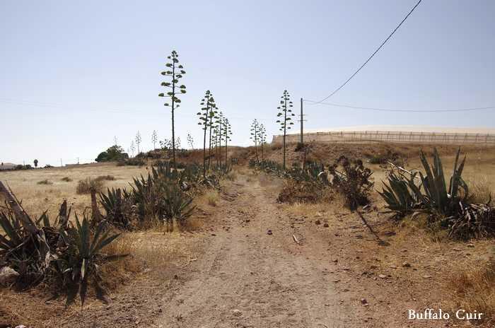 desert de Tabernas , que sont devenu les lieux de tournage Almeri10