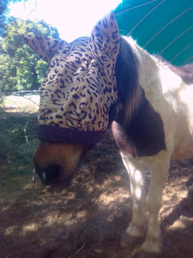 CANNELLE - ONC poney née en 2009 - adoptée en décembre 2013 par Catie - Page 3 Img_2010