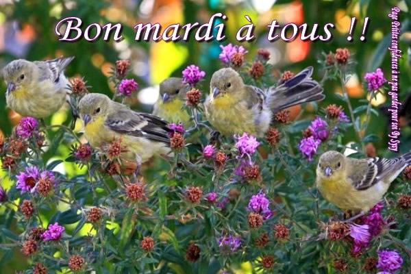 Bonjour, bonsoir..... - Page 5 Mardi12
