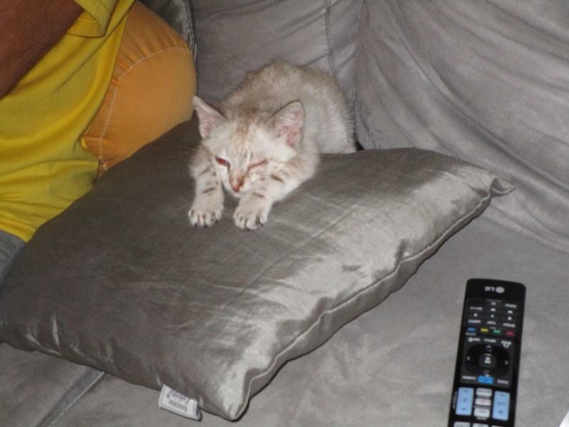 j'ai sauvé un chaton  Img_1210