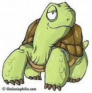 la tortue Tortue10