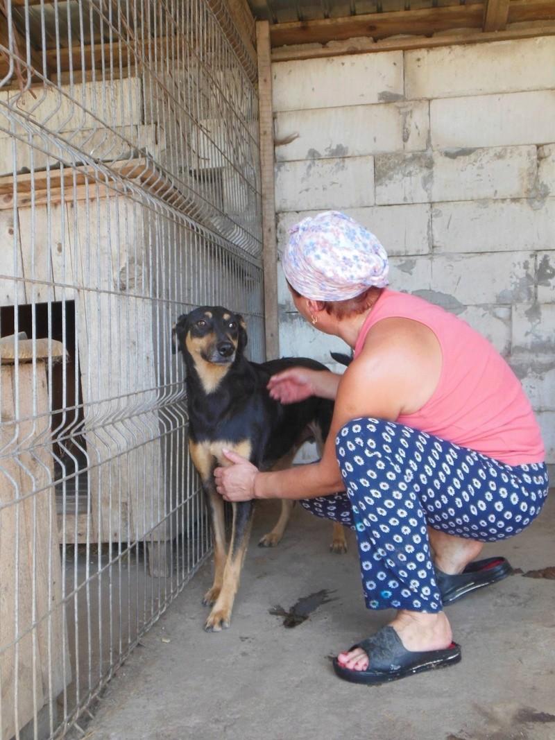 EWEN - NÉ EN 2013 - sauvé de Pallady le 23/05/2016 - parrainé par Laure -SC-R-SOS- 4610