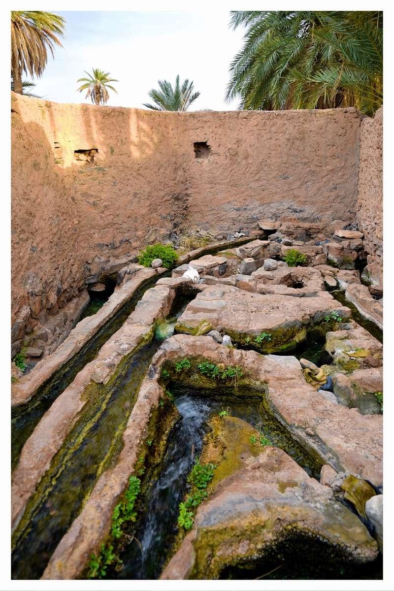 Haut Atlas de Marrakech a Figuig - Juin 2017 - Page 2 Dsc_4814