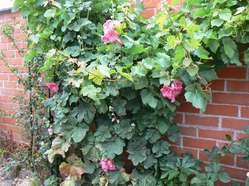 Les Jardins d'Athel Loren. P1150218