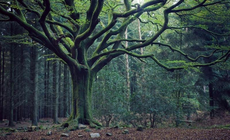 Rêve de fée : relaxation au coeur de Brocéliande Brocel10