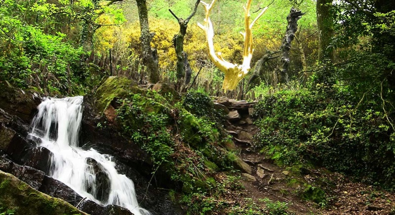 Rêve de fée : relaxation au coeur de Brocéliande Brocyl10