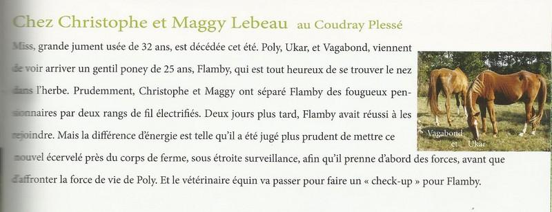 FLAMBY - ONC poney présumé né en 1987 - accueilli en décembre 2012 chez Pech-Petit  - Page 2 Nouvel14