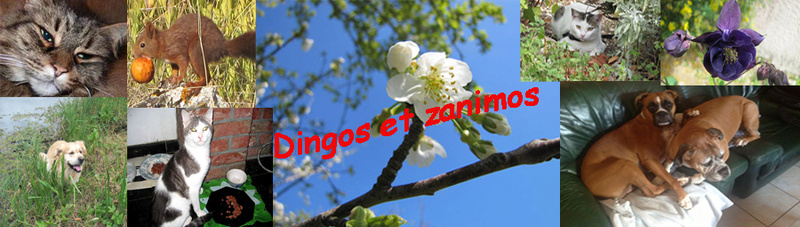 Dingos et Zanimos